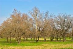 Парк - предыдущая весна - природа будя после длинной и трудной зимы Стоковое Изображение RF