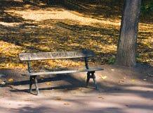 парк природы осени стоковые изображения rf