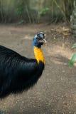 Парк птицы Бали в Sanur Стоковые Фотографии RF