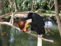 Парк птиц и гадов в Бали, toucan Стоковое Изображение