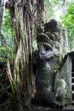 Парк пущи обезьяны Стоковые Фото