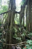 Парк пущи обезьяны Стоковые Изображения RF