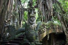 Парк пущи обезьяны Стоковые Фотографии RF