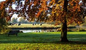 Парк рекой большим Ouse Стоковая Фотография RF