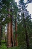 Парк секвойи, Калифорния Стоковые Фотографии RF