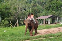 Парк слона Стоковая Фотография