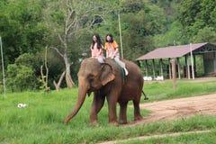 Парк слона Стоковое фото RF