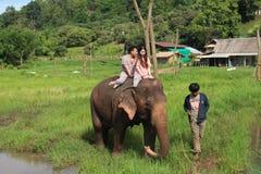 Парк слона Стоковая Фотография RF