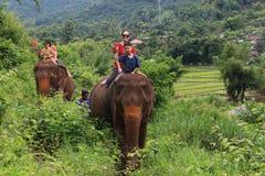 Парк слона Стоковые Фотографии RF