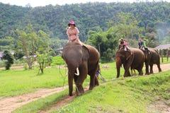 Парк слона Стоковые Изображения