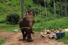 Парк слона Стоковое Изображение RF