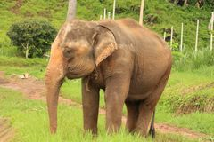 Парк слона Стоковые Изображения RF