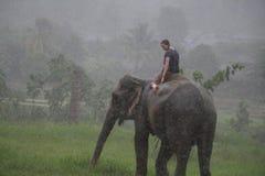 Парк слона Стоковое Фото