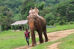 Парк слона Стоковые Фото