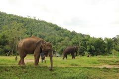 Парк слона Стоковое Изображение