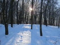 Парк, снег и холод зимы Бульвары деревьев стоковая фотография rf