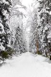парк снежный Стоковое фото RF