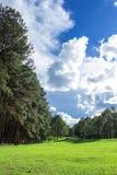 Парк сосны Стоковое Изображение RF