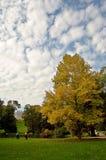 парк старейшиней Стоковая Фотография