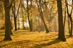 Парк стенда осенью Стоковые Фото