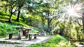 Парк страны лета Стоковые Фото