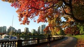 Парк Стэнли, морская дамба осени, Ванкувер акции видеоматериалы