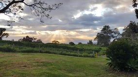Парк Сунь Ятсен в Ulupalakua, Мауи Стоковая Фотография RF