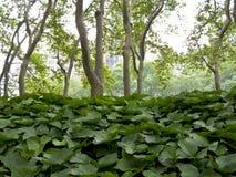 парк США york города bryant новый Стоковое Изображение RF