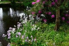 Парк с водой Стоковое Изображение RF