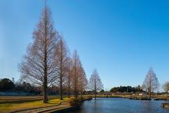 Парк с высокими деревьями Стоковое Изображение