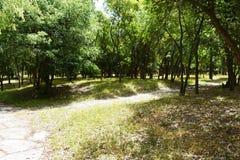 Парк с зелеными деревьями стоковое изображение rf