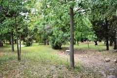 Парк с зелеными деревьями стоковые изображения rf