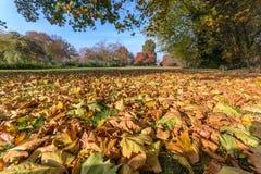 Парк с листвой Стоковые Изображения RF