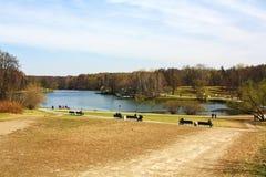 Парк с озером и лесом Стоковые Изображения RF