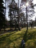 Парк с собакой стоковое фото rf