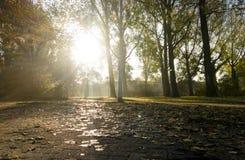 Парк с солнцем в падении Стоковая Фотография