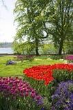 Парк с цветками тюльпана Стоковое Фото