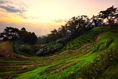 парк Таиланд pai nam huai dang национальный Стоковая Фотография