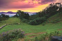 парк Таиланд pai nam huai dang национальный стоковое фото rf