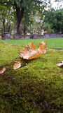 парк лужайки ландшафта листва осени вниз упаденный Стоковое Фото