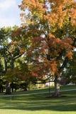 Парк университета Вермонта стоковое фото rf