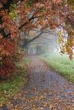 парк утра осени туманнейший Стоковое Фото