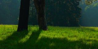 парк утра старый солнечный Стоковое Фото