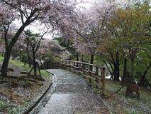 Парк цветения Стоковые Изображения