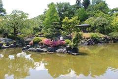 Парк цветения chery зимы Стоковые Изображения RF