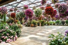Парк цветка Стоковые Изображения RF