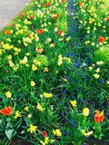 Парк цветка Стоковое Изображение RF