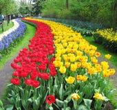Парк цветка Keukenhof стоковые изображения rf