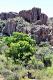 Парк штата дендропарка Boyce Томпсона, главный начальник, Аризона Соединенные Штаты Стоковое фото RF