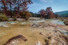 Парк штата запасати реки Frio в Техасе Стоковая Фотография RF